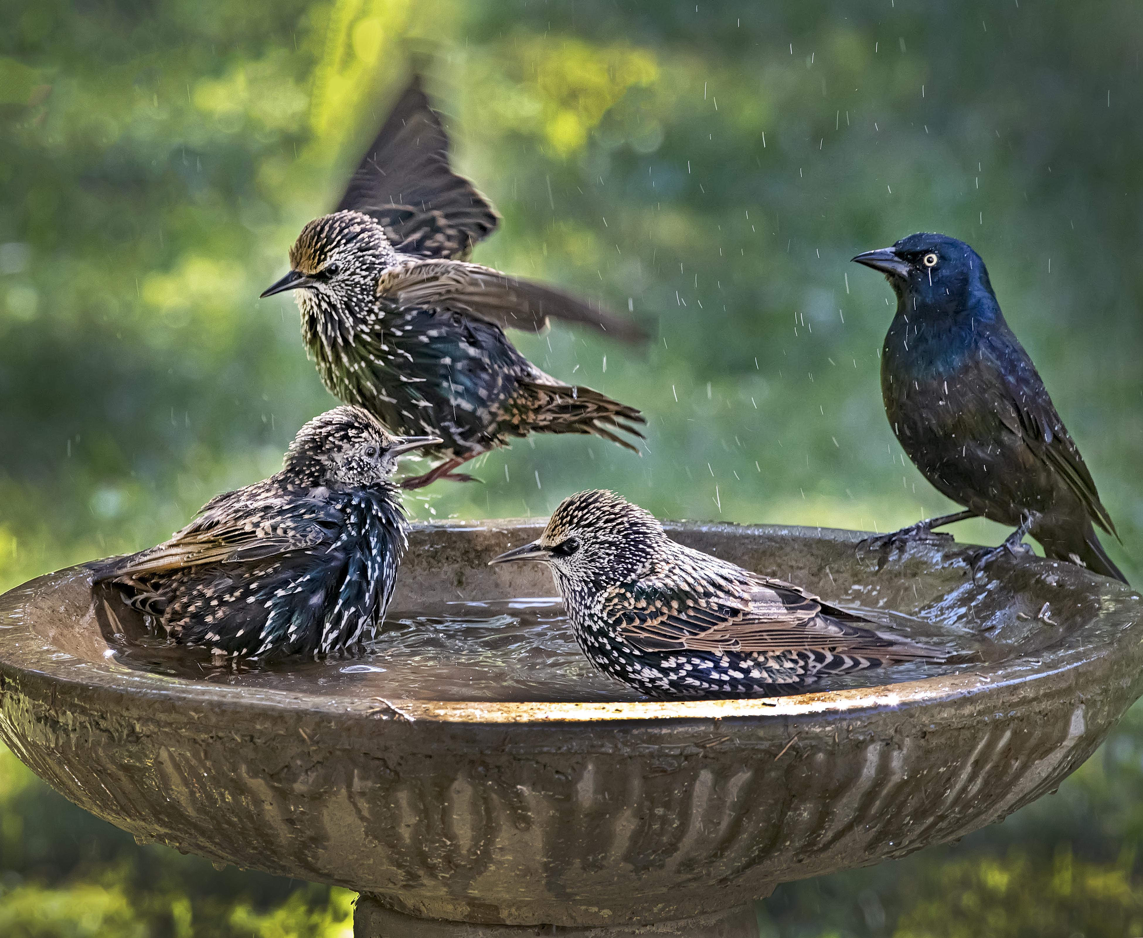 Bird-Bath-party