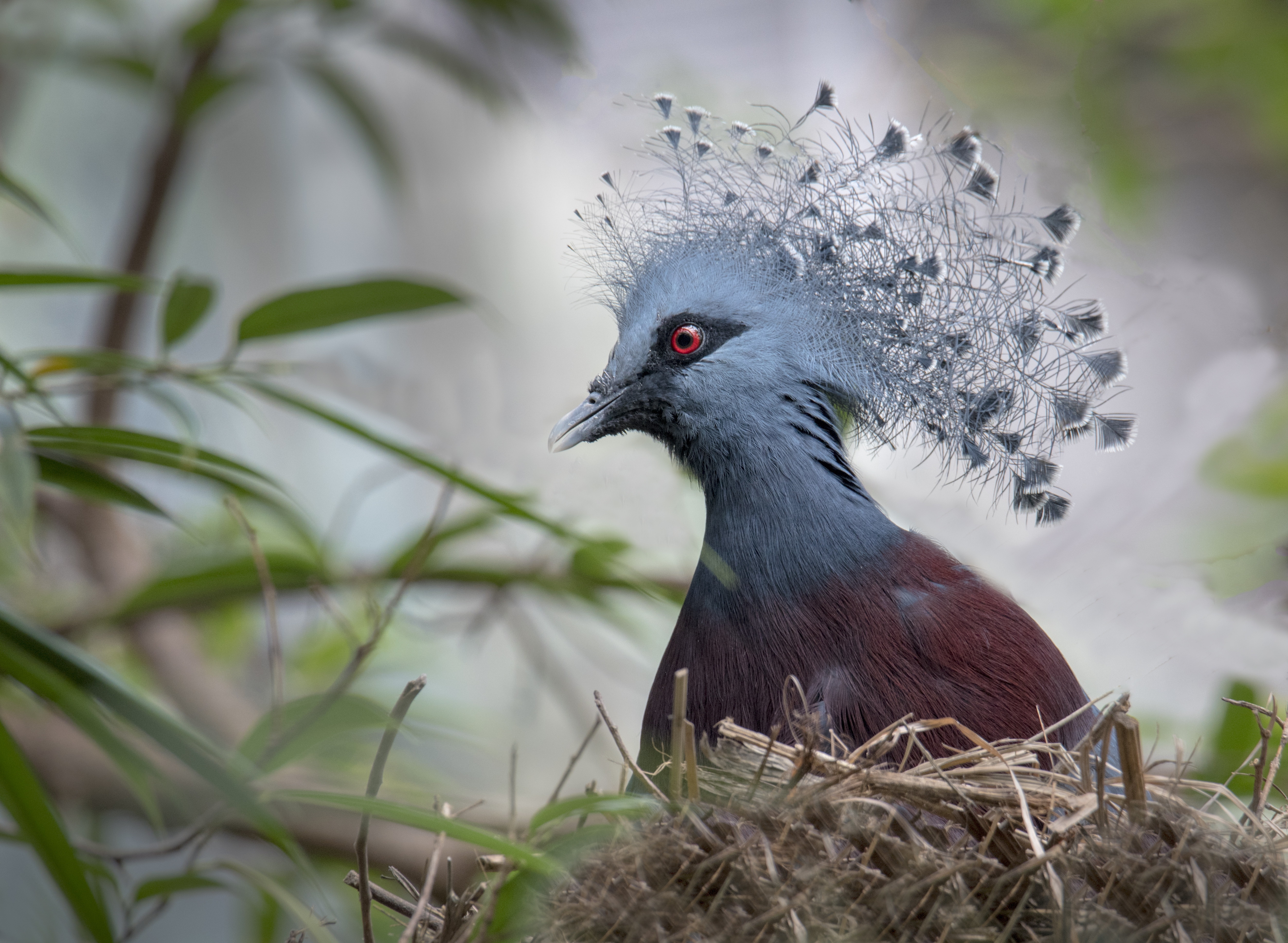 Blue-bird-red-eyes