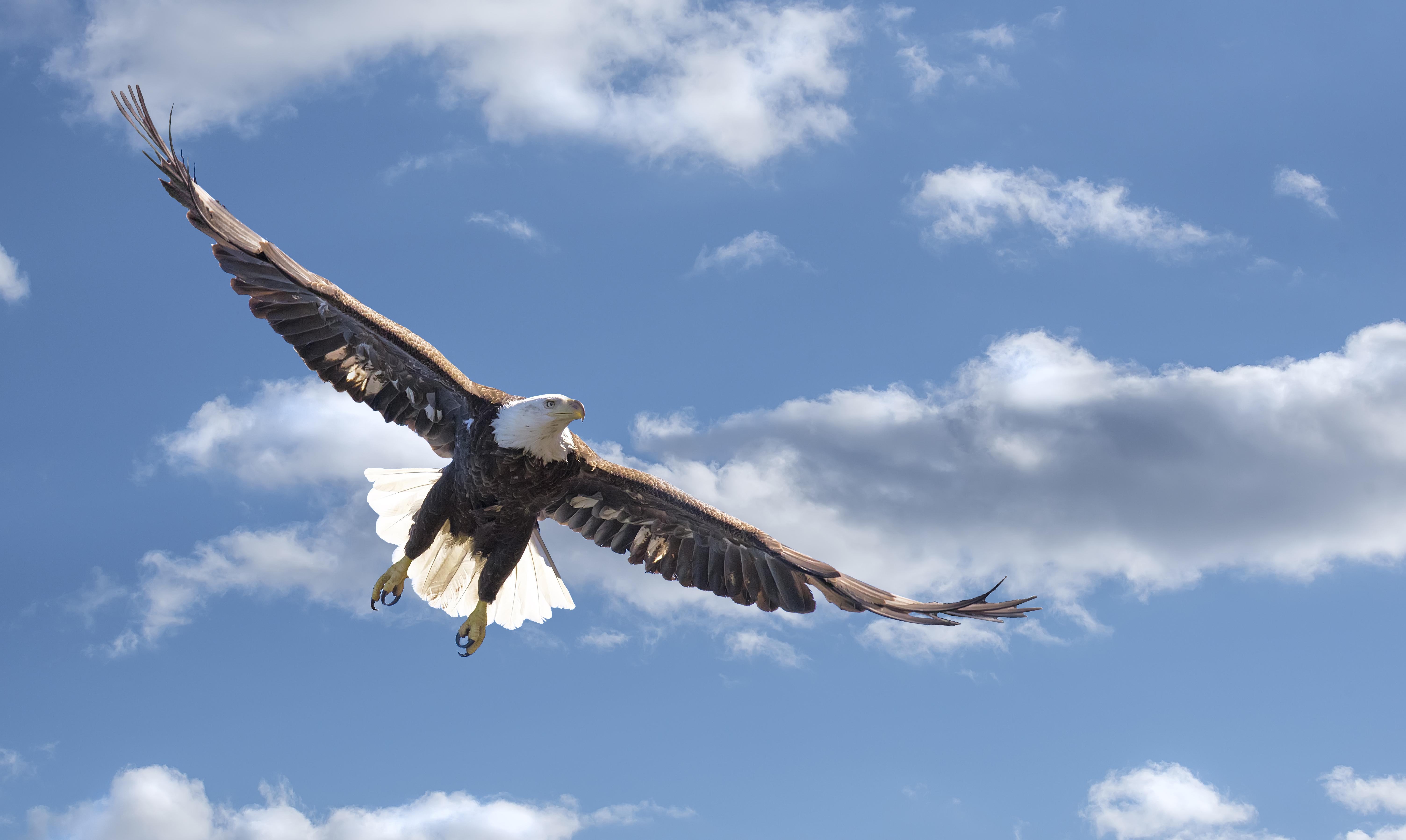 Eagle-in-clouds
