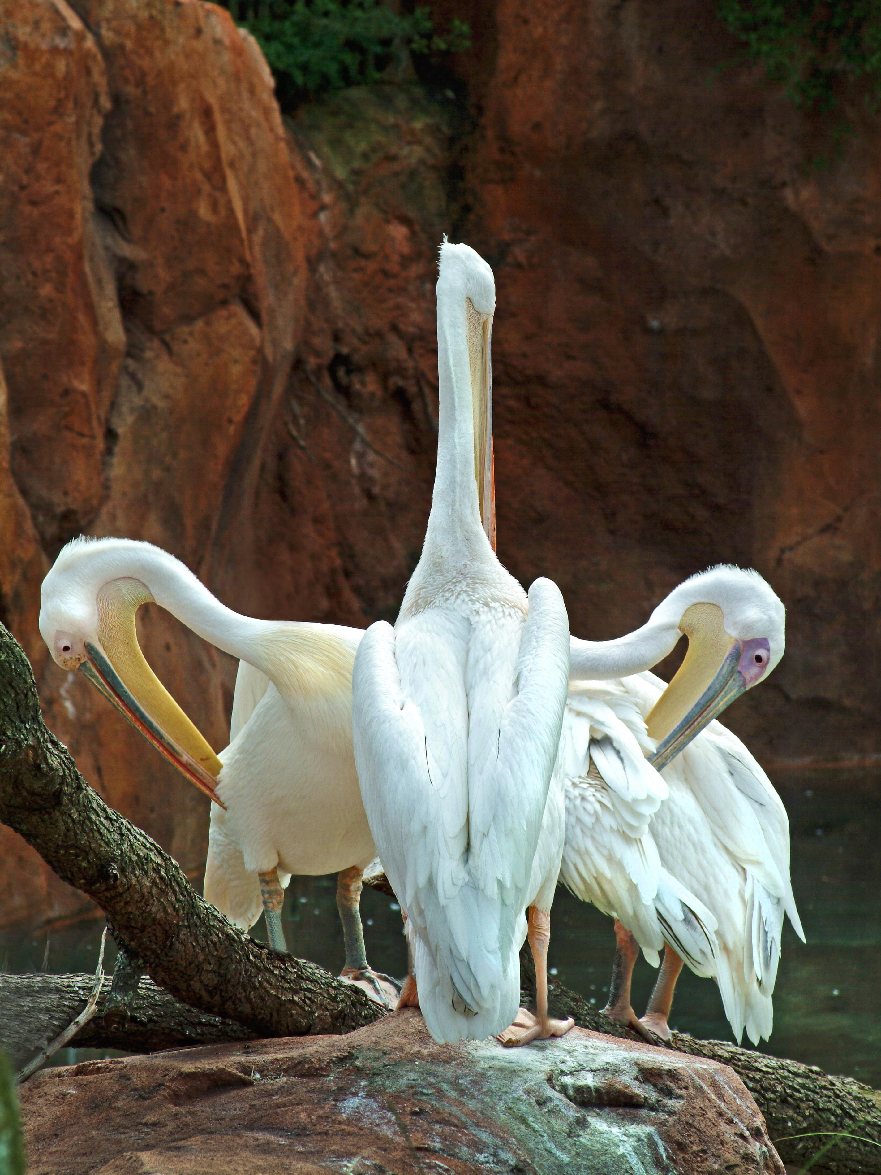 White-Storks-Pruning