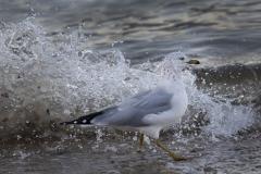 1_Seagull-and-Splash