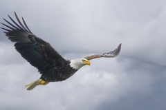 Eagle-in-clouds-2