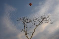 Heart-baloon-on-Tree2