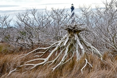 Tree Root and Light House color S