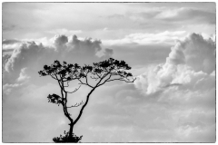Tree-in-clouds