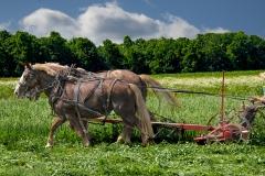 Amish-Boy-Cutting-Grass