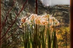 Flowers in window MoHonk MH